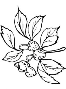 Strawberry-berries-coloring-pages-17