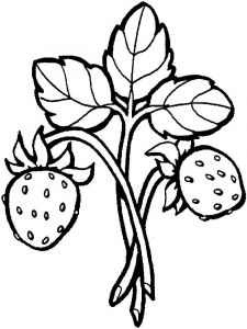 Strawberry-berries-coloring-pages-5