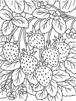 Strawberry-berries-coloring-pages-7