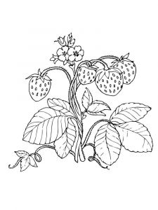Strawberry-berries-coloring-pages-8