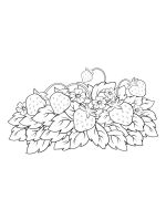 Strawberry-coloring-pages-16