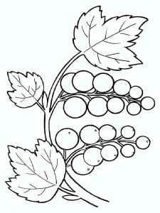currant-berries-coloring-pages-2