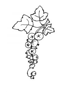 currant-berries-coloring-pages-4