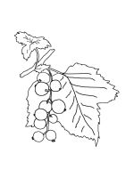 currant-coloring-pages-3
