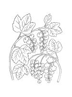 currant-coloring-pages-4