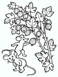 gooseberry-berries-coloring-pages-1