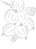 gooseberry-berries-coloring-pages-10