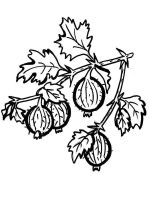gooseberry-berries-coloring-pages-3