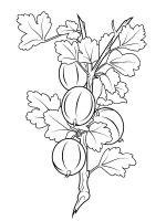 gooseberry-berries-coloring-pages-5