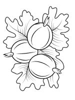 gooseberry-berries-coloring-pages-6