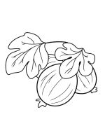 gooseberry-coloring-pages-2