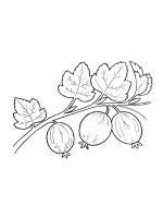 gooseberry-coloring-pages-6