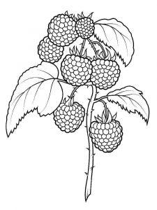raspberries-berries-coloring-pages-10