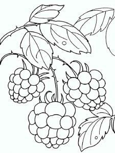 raspberries-berries-coloring-pages-11