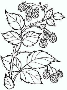 raspberries-berries-coloring-pages-2