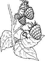 raspberries-berries-coloring-pages-4