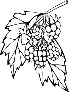 raspberries-berries-coloring-pages-7