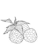 raspberries-berries-coloring-pages-8