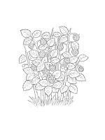 raspberries-coloring-pages-1