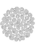 raspberries-coloring-pages-15