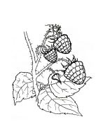 raspberries-coloring-pages-2