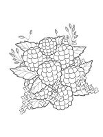 raspberries-coloring-pages-6