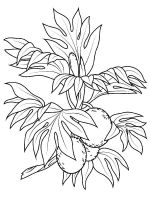 Breadfruit-fruits-coloring-pages-1
