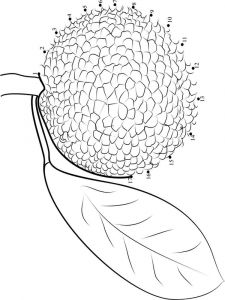 Breadfruit-fruits-coloring-pages-4