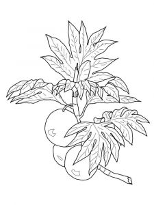 Breadfruit-fruits-coloring-pages-5