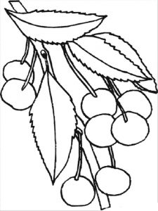 Cherry-fruits-coloring-pages-11