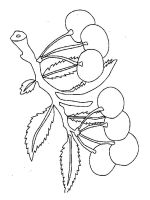 Cherry-fruits-coloring-pages-12