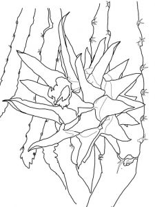 Dragon-fruits-coloring-pages-5