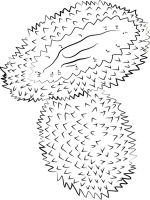 Durian-fruits-coloring-pages-2