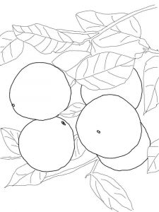 Grapefruit-fruits-coloring-pages-5