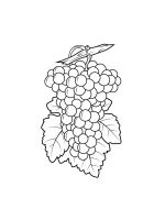Grapes-coloring-pages-10