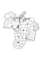 Grapes-coloring-pages-6