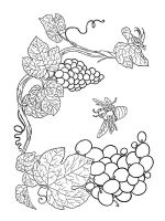 Grapes-fruits-coloring-pages-11
