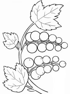 Grapes-fruits-coloring-pages-16