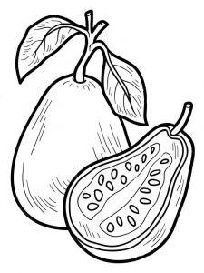 Guavas-fruits-coloring-pages-1