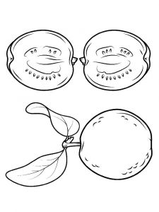 Guavas-fruits-coloring-pages-5