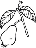 Guavas-fruits-coloring-pages-6