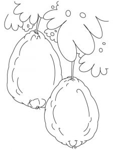 Guavas-fruits-coloring-pages-7
