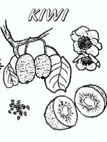 Kiwi-fruits-coloring-pages-7