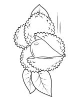 Lychee-fruits-coloring-pages-1
