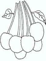 Lychee-fruits-coloring-pages-3