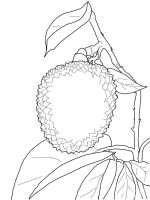 Lychee-fruits-coloring-pages-5