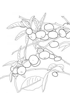 Mandarin(Tangerine)-fruits-coloring-pages-5
