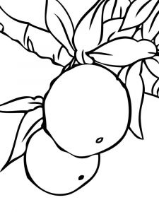 Mandarin(Tangerine)-fruits-coloring-pages-9