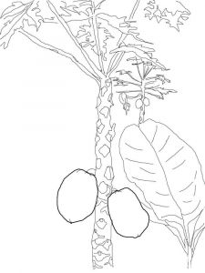Mango-fruits-coloring-pages-11