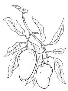 Mango-fruits-coloring-pages-9
